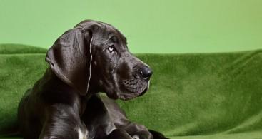 dog-1966394_640